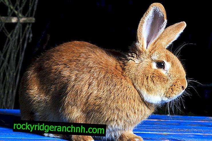 ¿Es posible incluir bardanas en la dieta de los conejos?