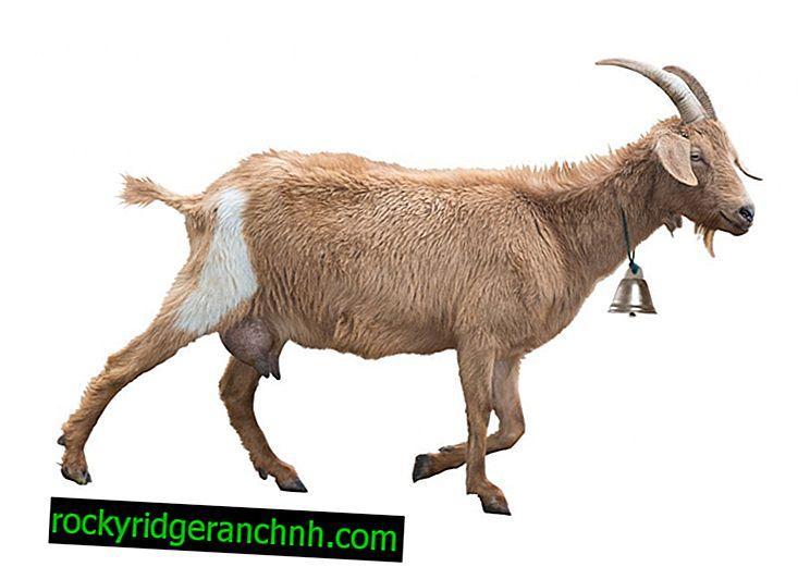 Kakav bi trebao biti udba koza