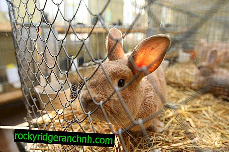 Hur man gör kaninburar från ett rutnät