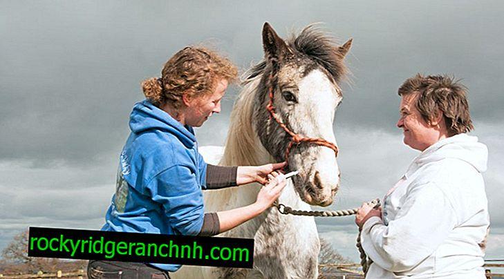 Как да яздим кон, докато яздим