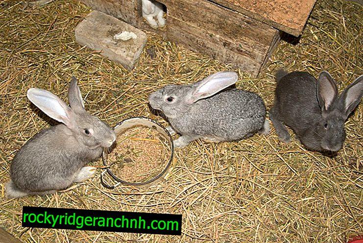 Coniglio fai-da-te che fa a casa