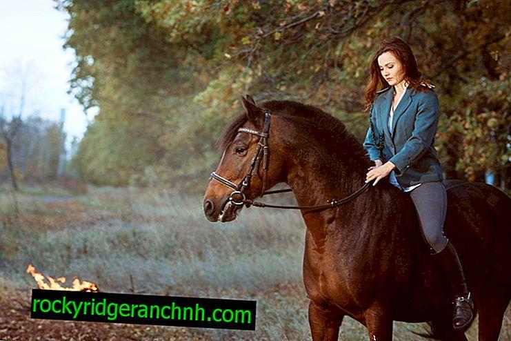 Atın Karak takımının tanımı