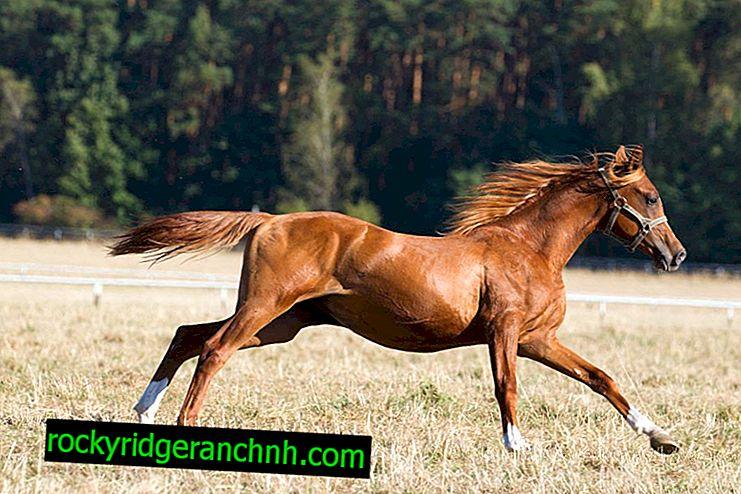 Factores que afectan la velocidad del caballo