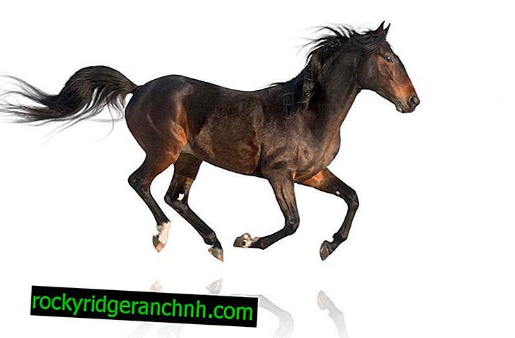 Rassen van paardenrennen