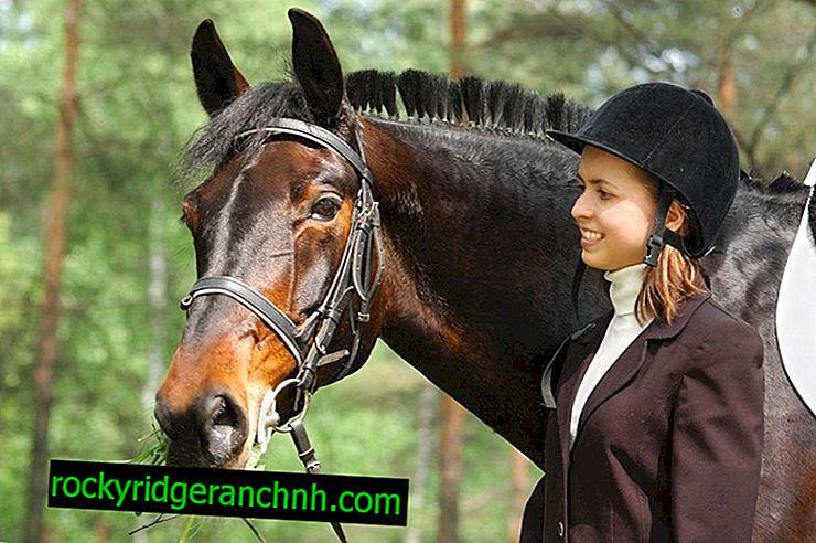 Opis konj pasme ruska Rysista