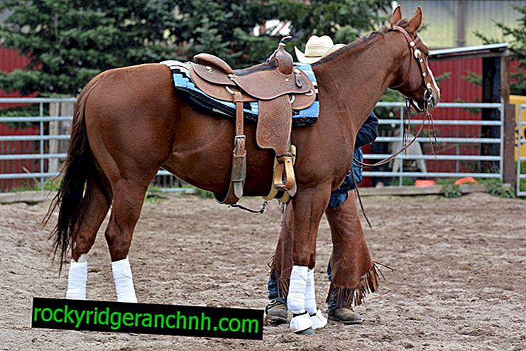 Як правильно зробити сідло для коня і яких видів воно буває