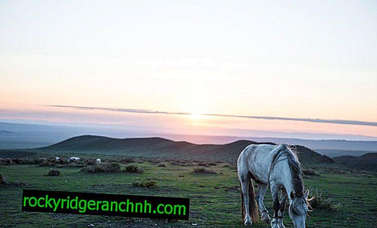 Opis mongolskog konja