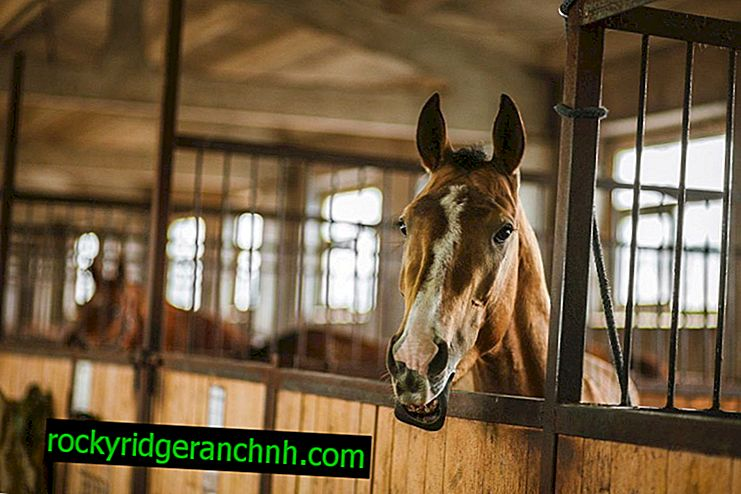 How to build a horse stall